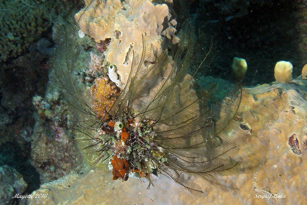 corail_de_feu-jpg